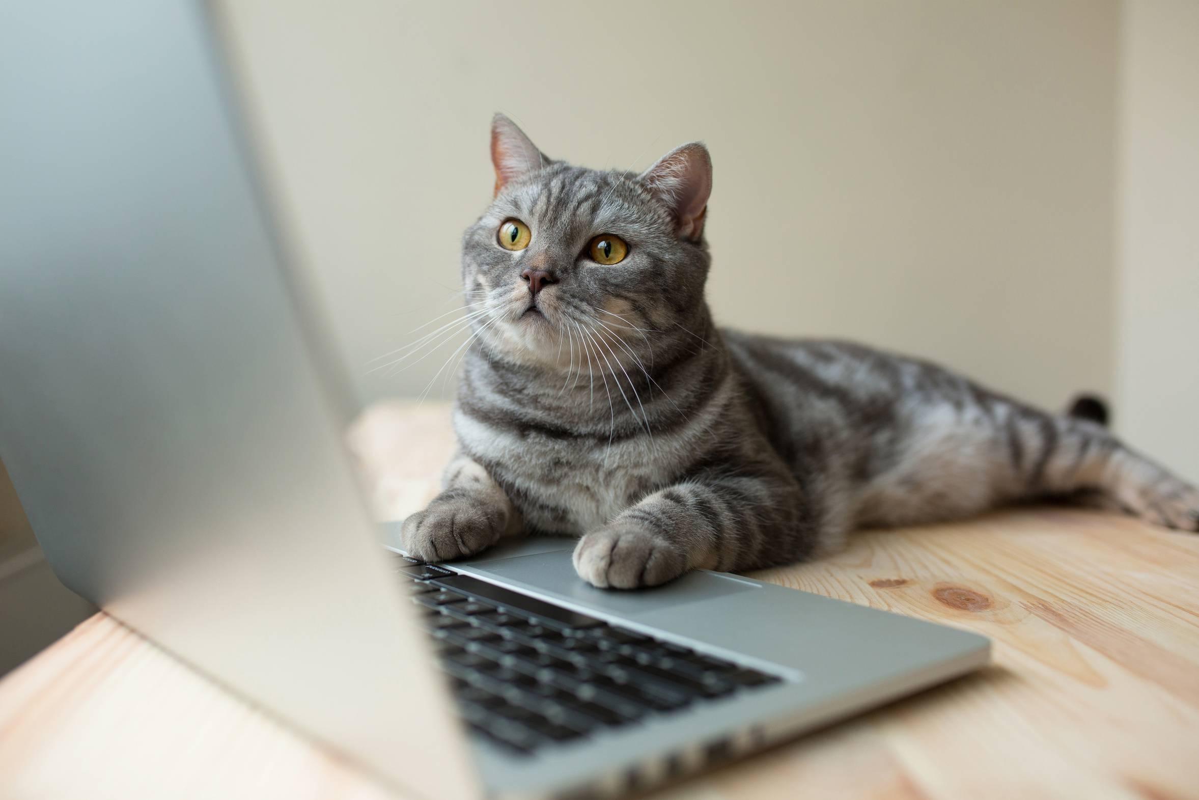 Symbolbild einer Katze